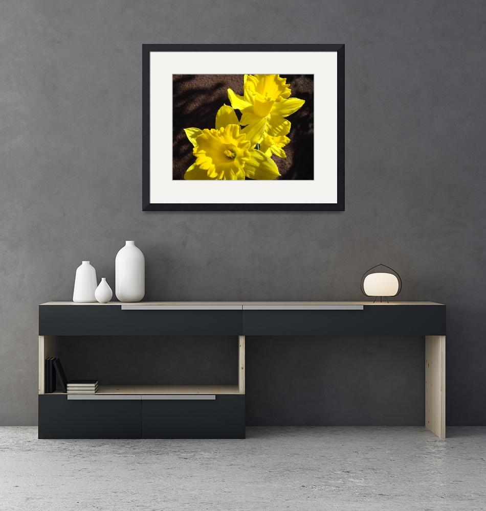 """Glowing Daffodil Flowers art photography""  (2011) by BasleeTroutman"