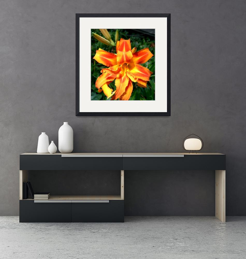 """""""Spectacular Daylily""""  (2008) by rayjacque"""