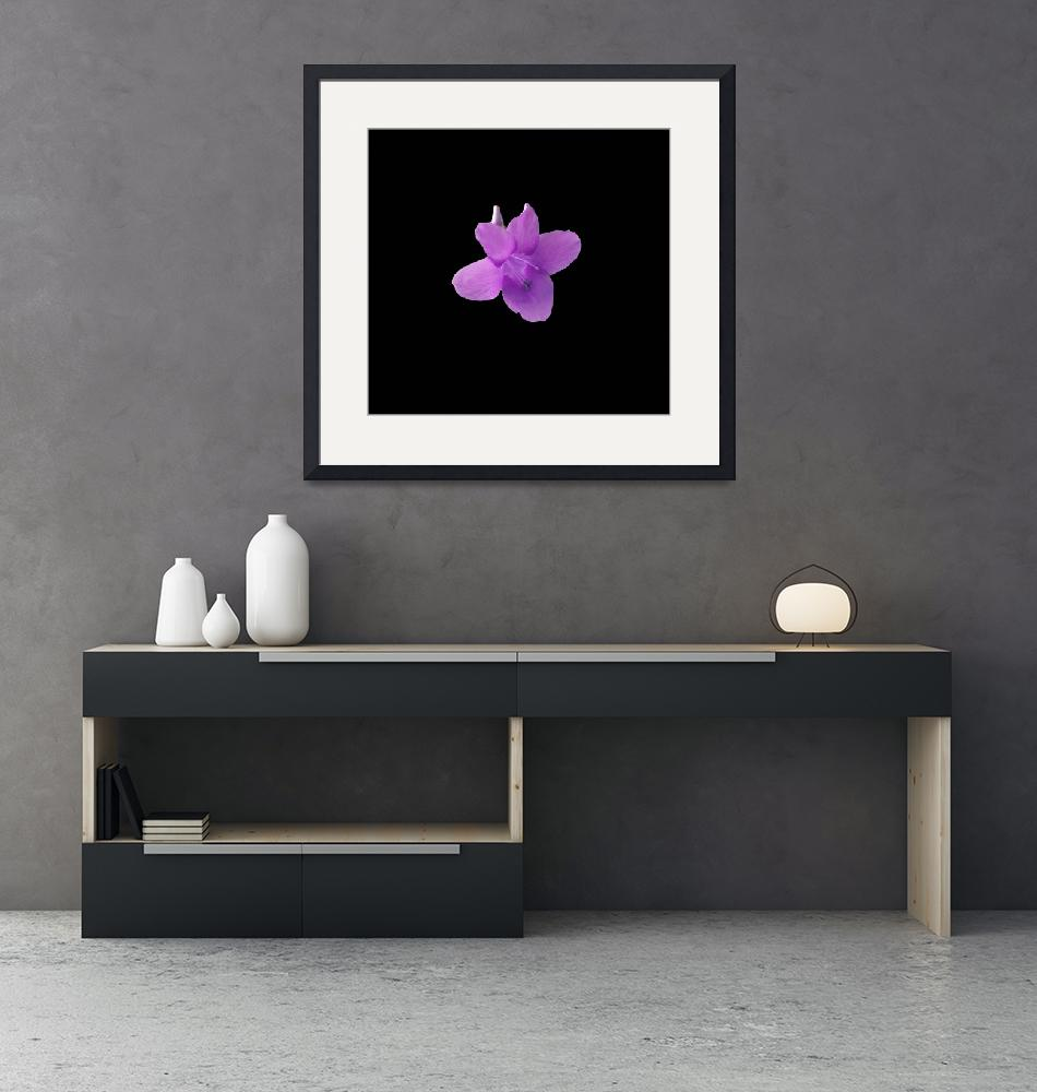 """Violet colored Philippine Violet on dramatic black""  (2018) by NormaStampSunnyDaze"