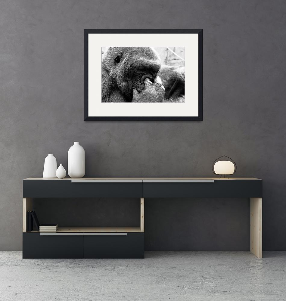 """""""Gorilla""""  (2008) by photograph3r"""