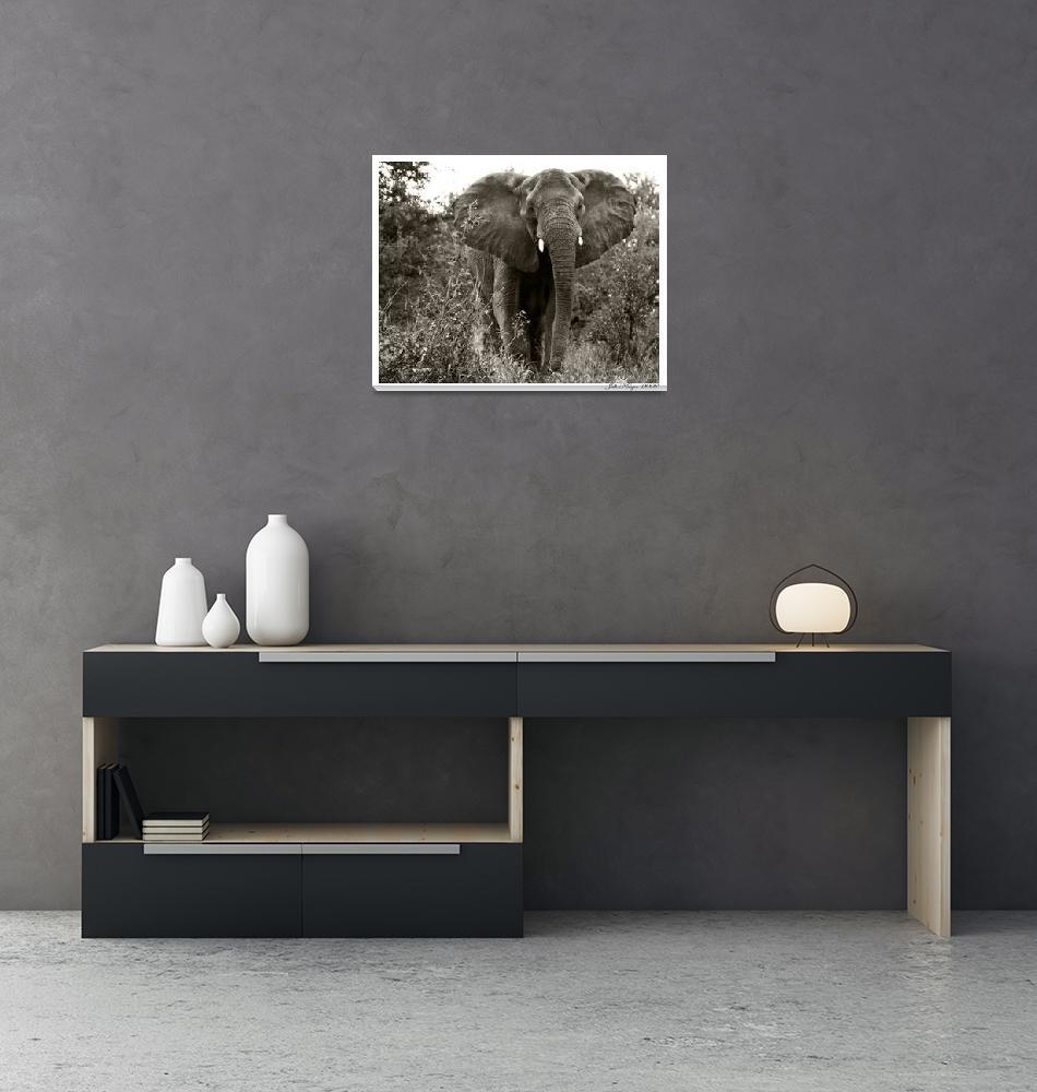 """""""Mama Elephant""""  (2007) by juliekruger"""