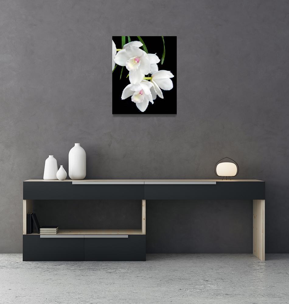 """Cymbidium Orchid Lovely Angel"