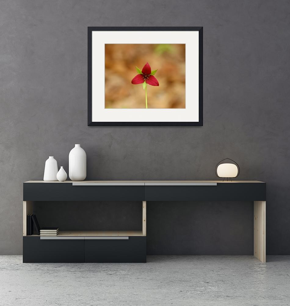 """""""Red Trillium""""  (2006) by ecoday"""