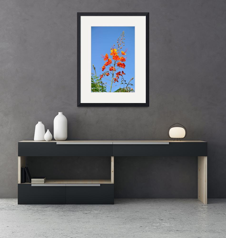 """""""The Mexican Bird of Paradise on Blue""""  (2013) by Kirtdtisdale"""
