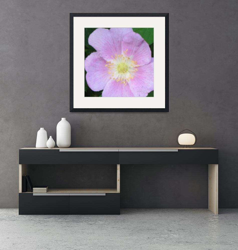 """""""Wild Rose Oil Painting""""  (2010) by hawkephotography"""
