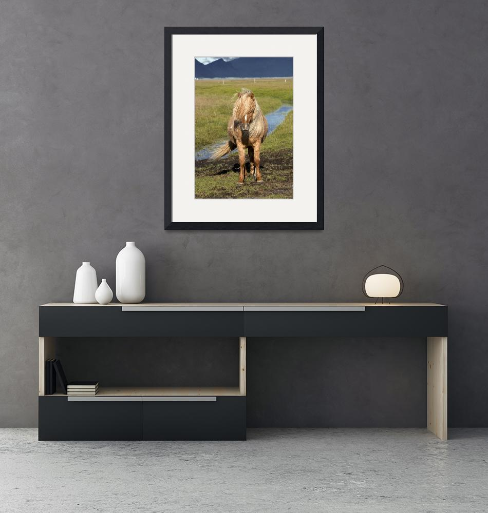 """Icelandic Horse Portrait""  (2005) by Degginger"