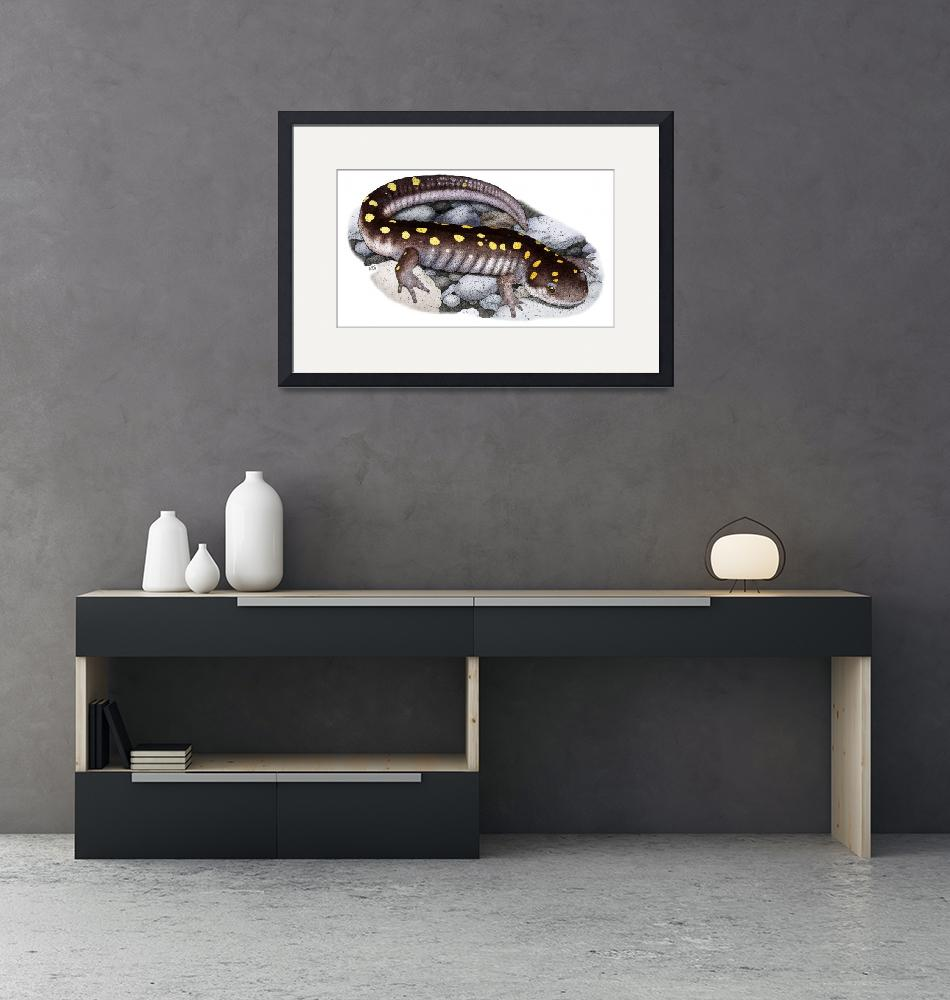 """""""Spotted Salamander""""  (2009) by inkart"""