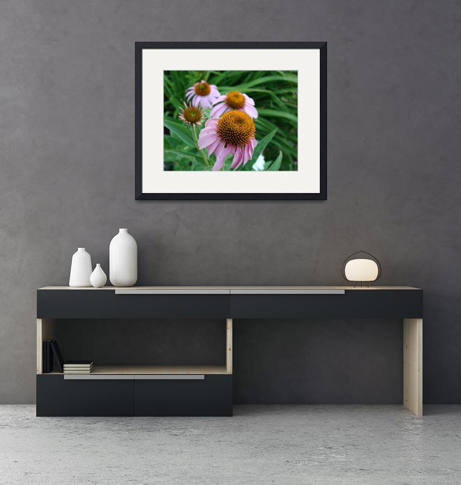 """""""Echinacea Flowers""""  by shutterscapecreations"""