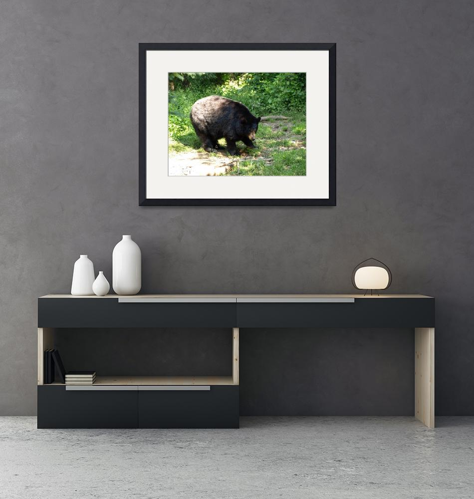 """""""Black bear time""""  (2009) by Albertphoto"""