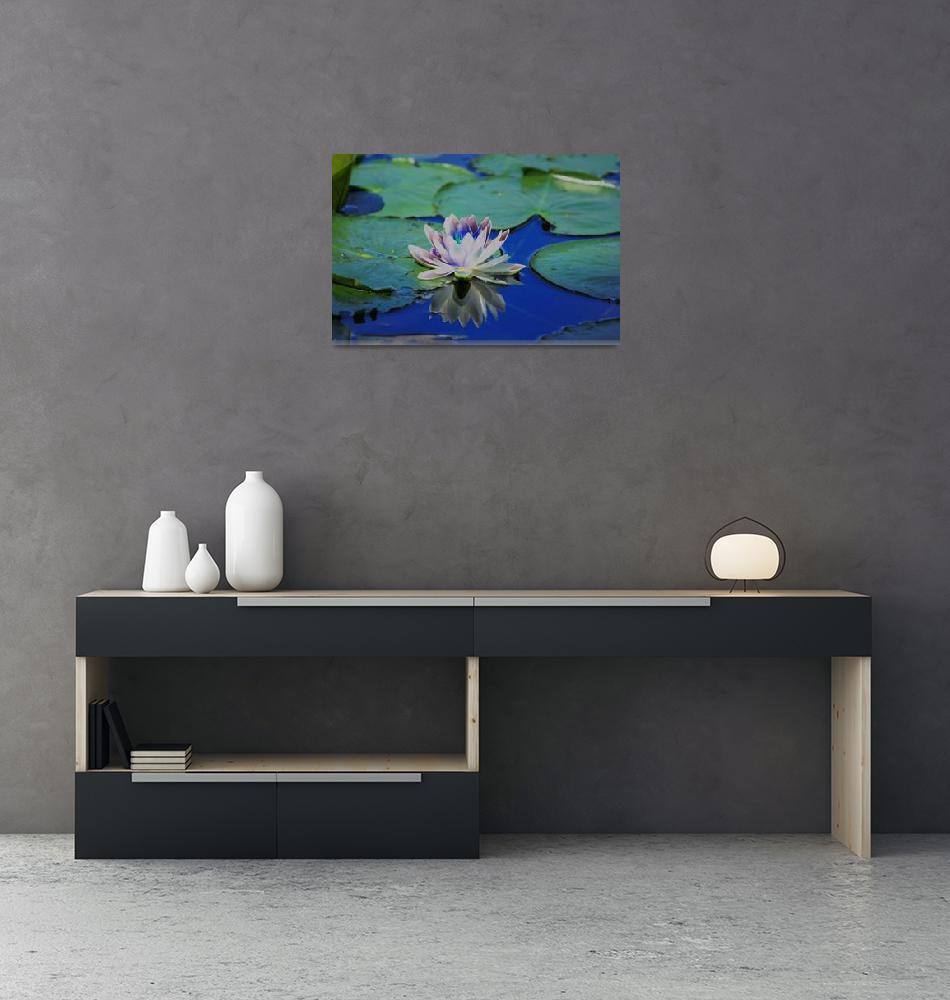 """Water Lily""  by karolsstuff"