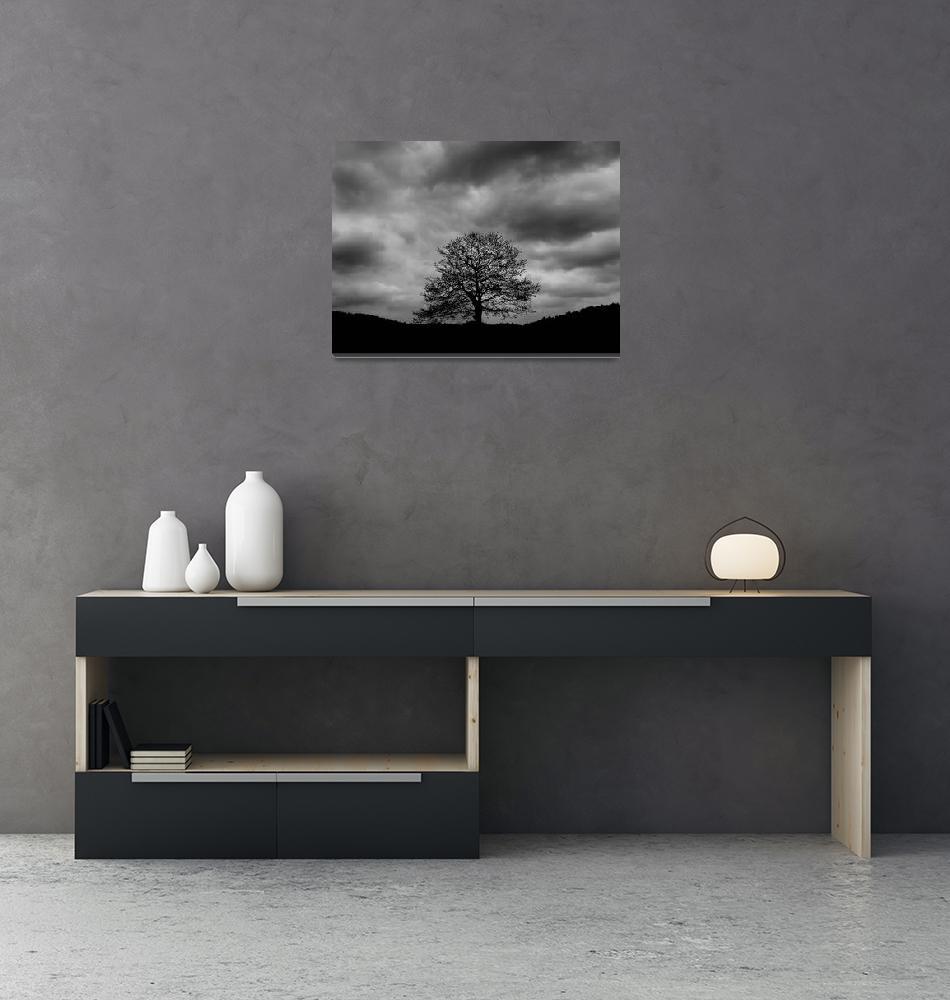 """Tree""  (2007) by rastko"
