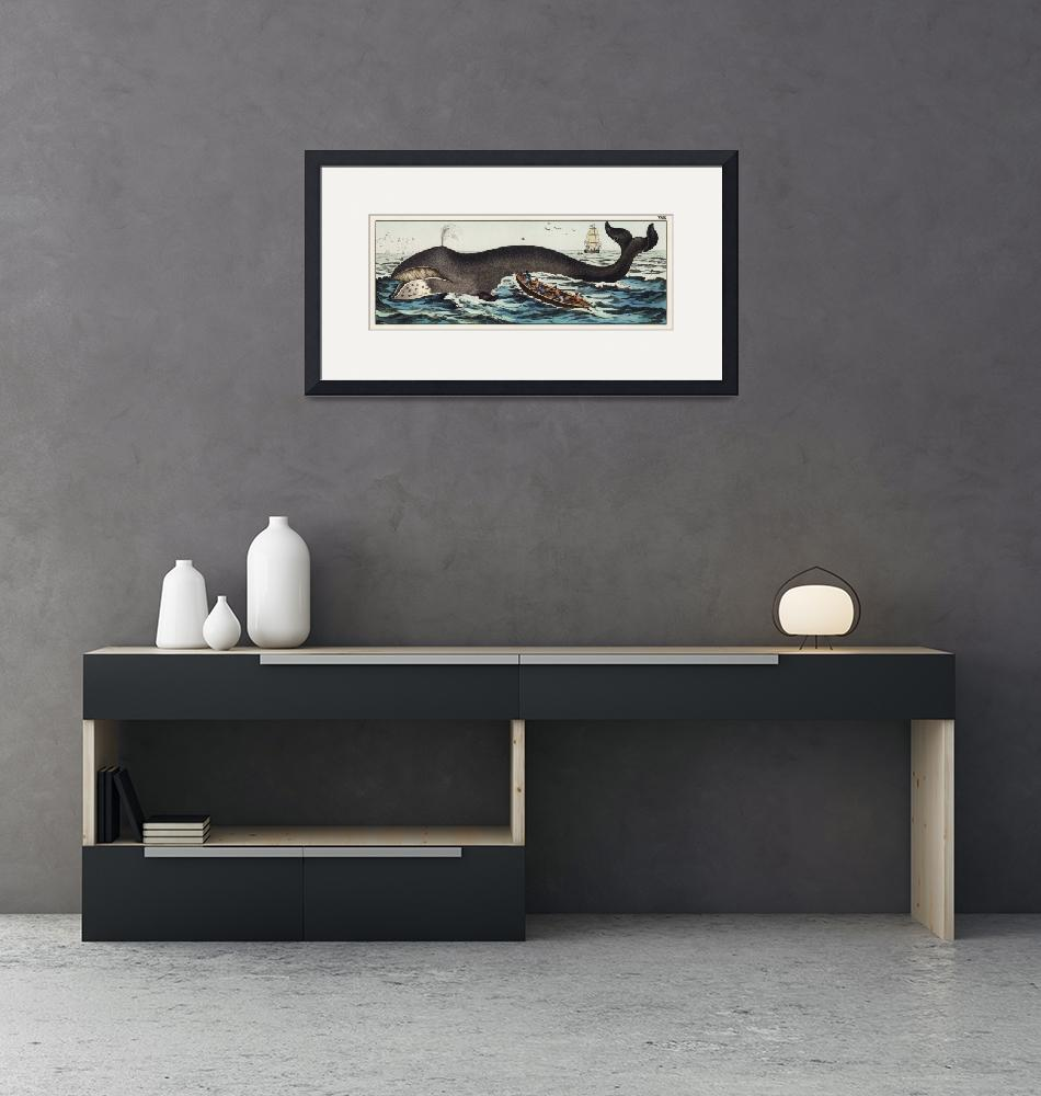 """""""A lithograph of the bowhead whale from a German na"""" by motionage"""