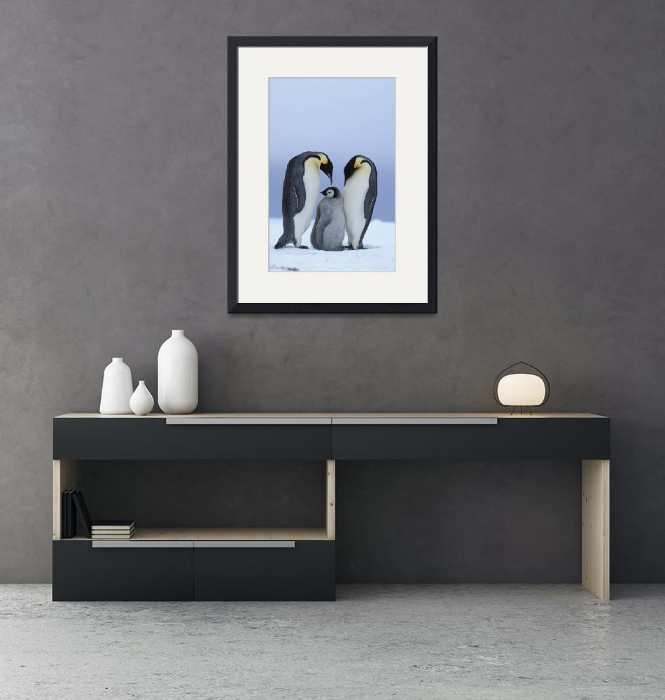 """Royal Penguins and Baby""  by Panoramic_Images"