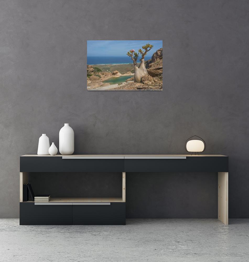 """Bottle-tree-Socotra""  (2014) by johnlund"