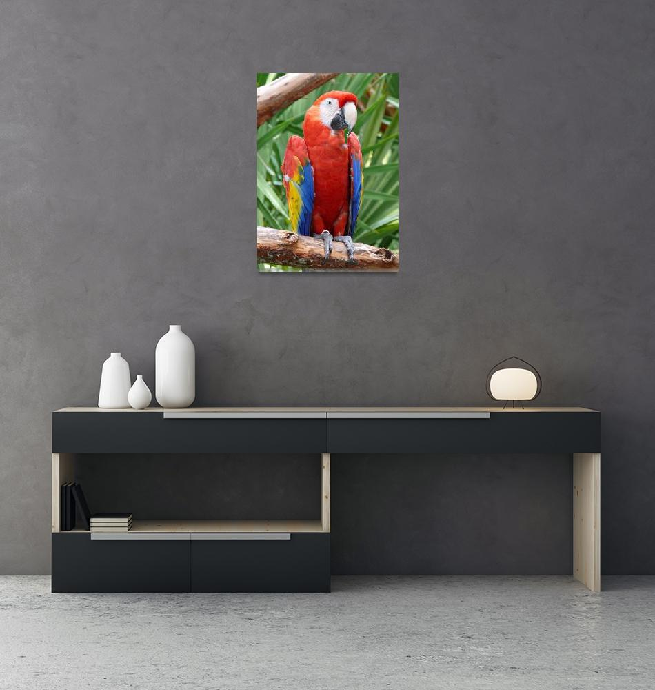 """Scarlet Macaw""  (2007) by stockphotos"