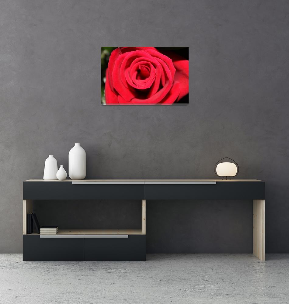 """Anniversary Rose""  (2009) by SpiderWebDesigns"