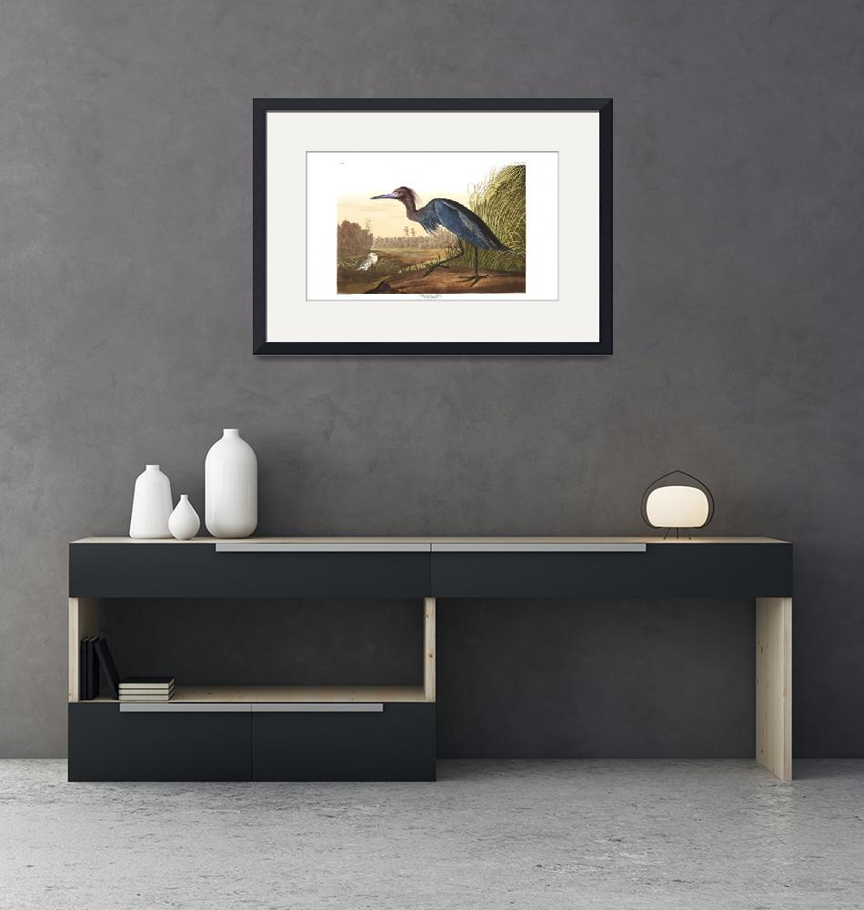 """""""Blue Crane or Heron, Plate 307""""  by FineArtClassics"""