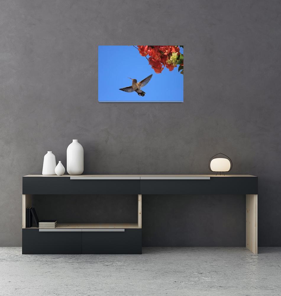"""""""Hummingbird 2""""  (2010) by robbdee40"""