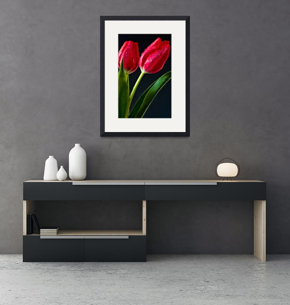 """""""Two Tulips""""  (2013) by boppintheblues"""