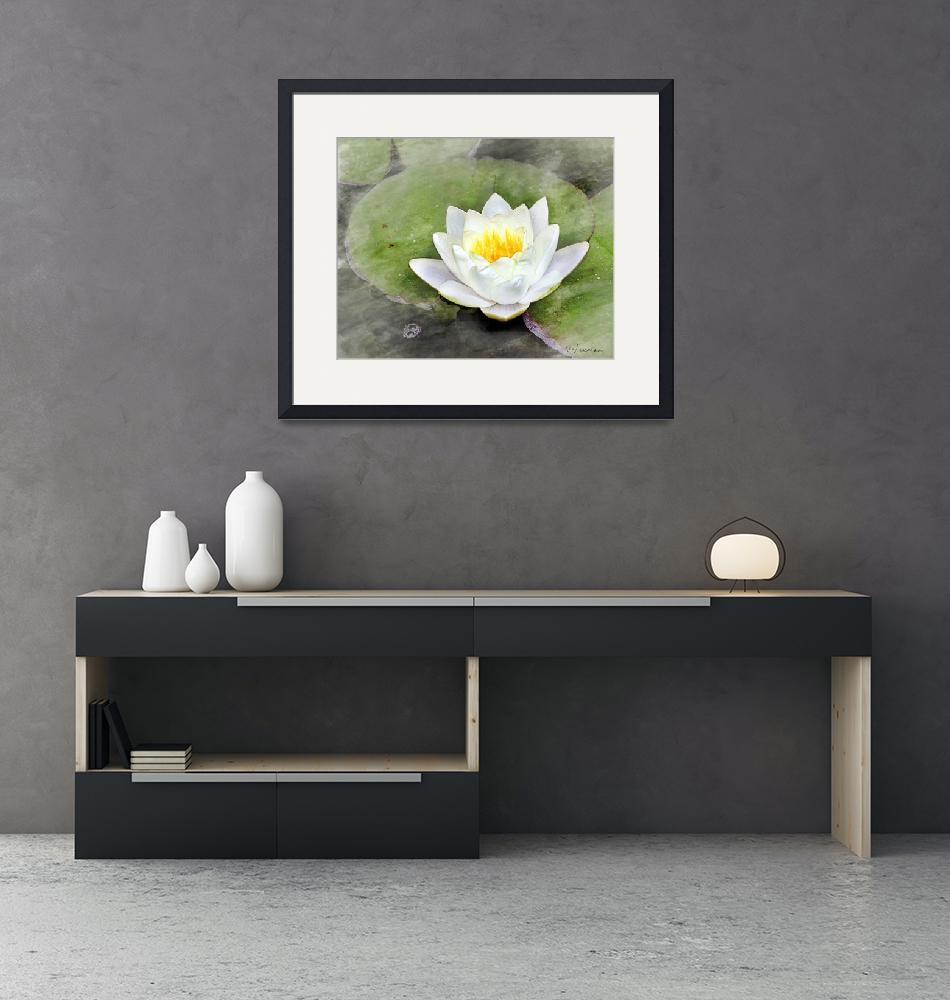 """""""The Water Lily""""  (2011) by FlowersforMyLady"""