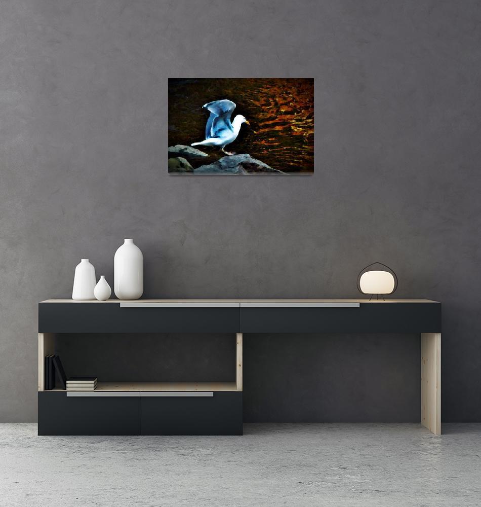 """""""Gull""""  (2010) by bavosiphotoart"""