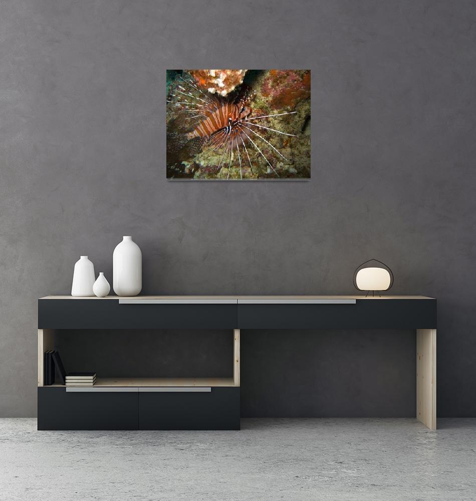 """Lionfish""  by Mac"