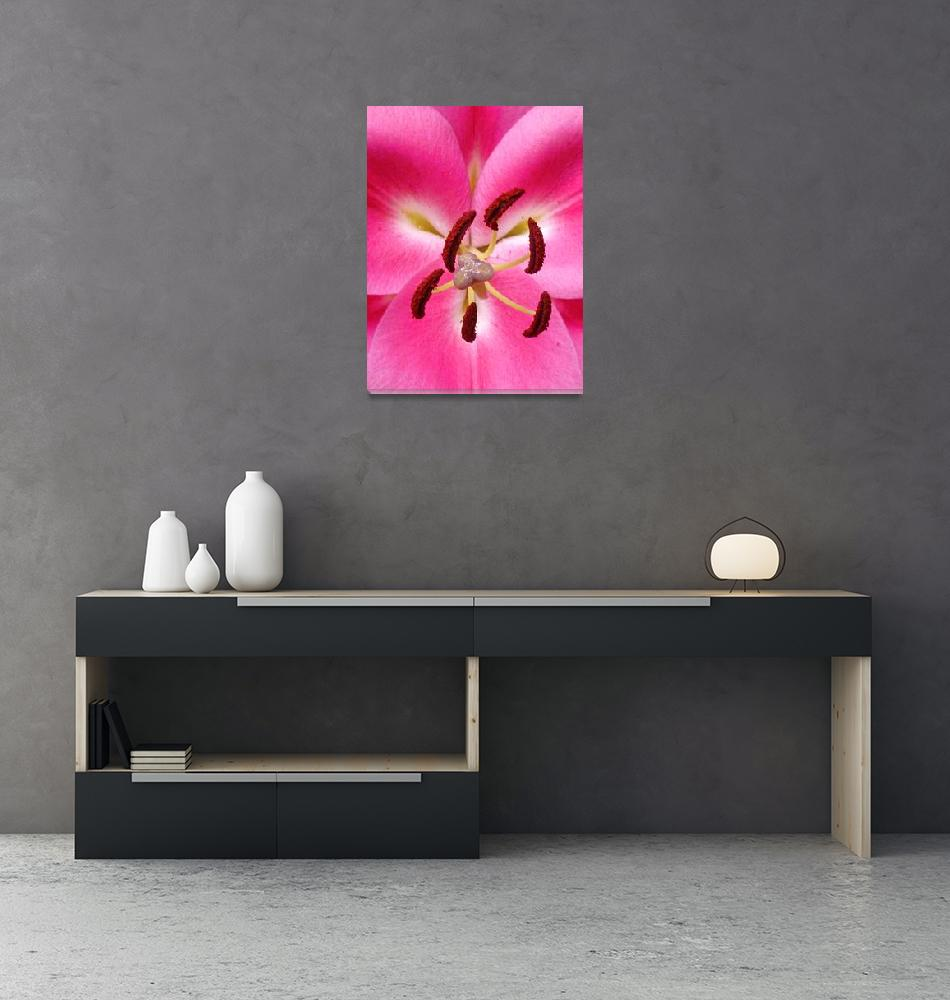 """Pink Lily""  (2012) by joeyartist"
