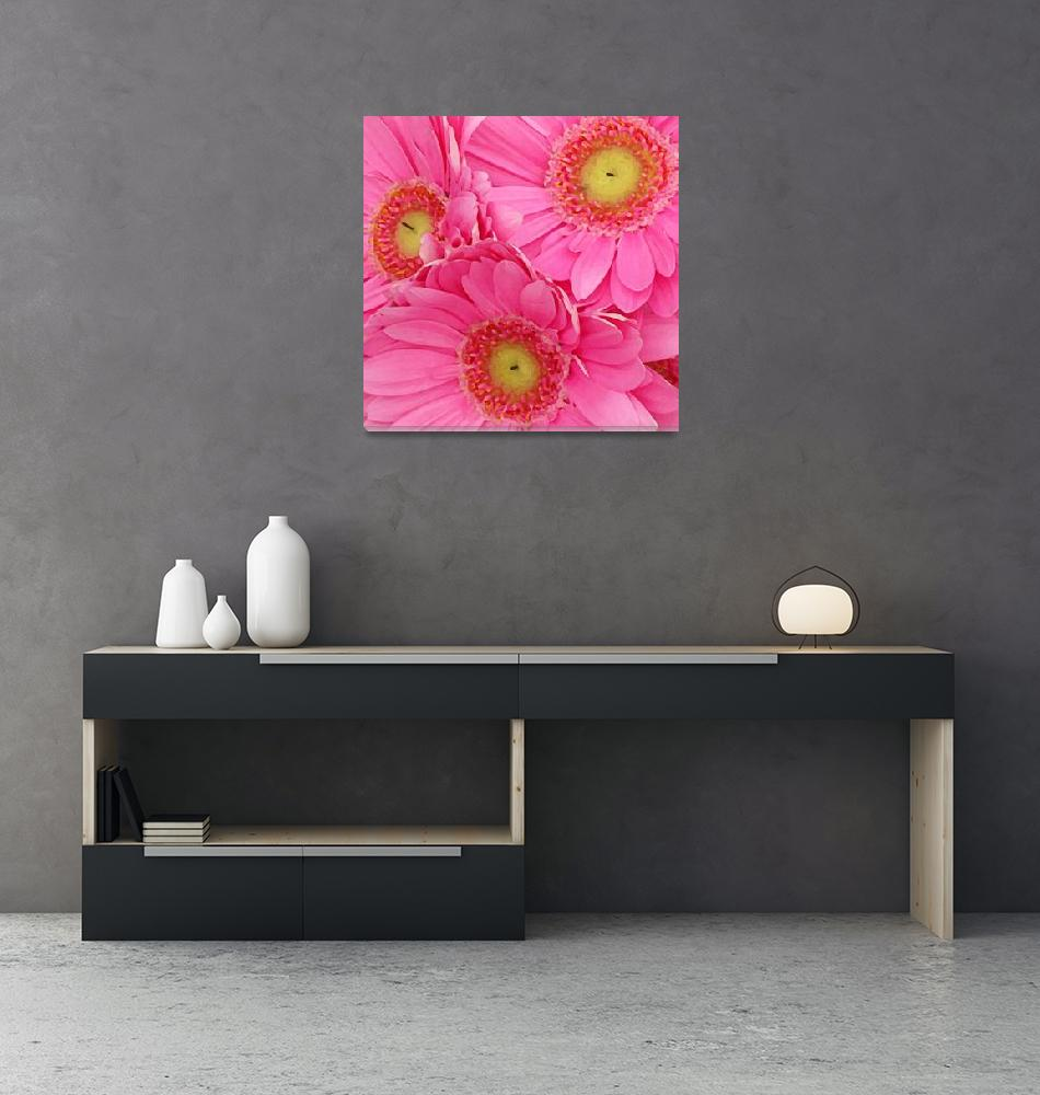 """""""Pink Gerbers Square""""  (2009) by AmyVangsgard"""