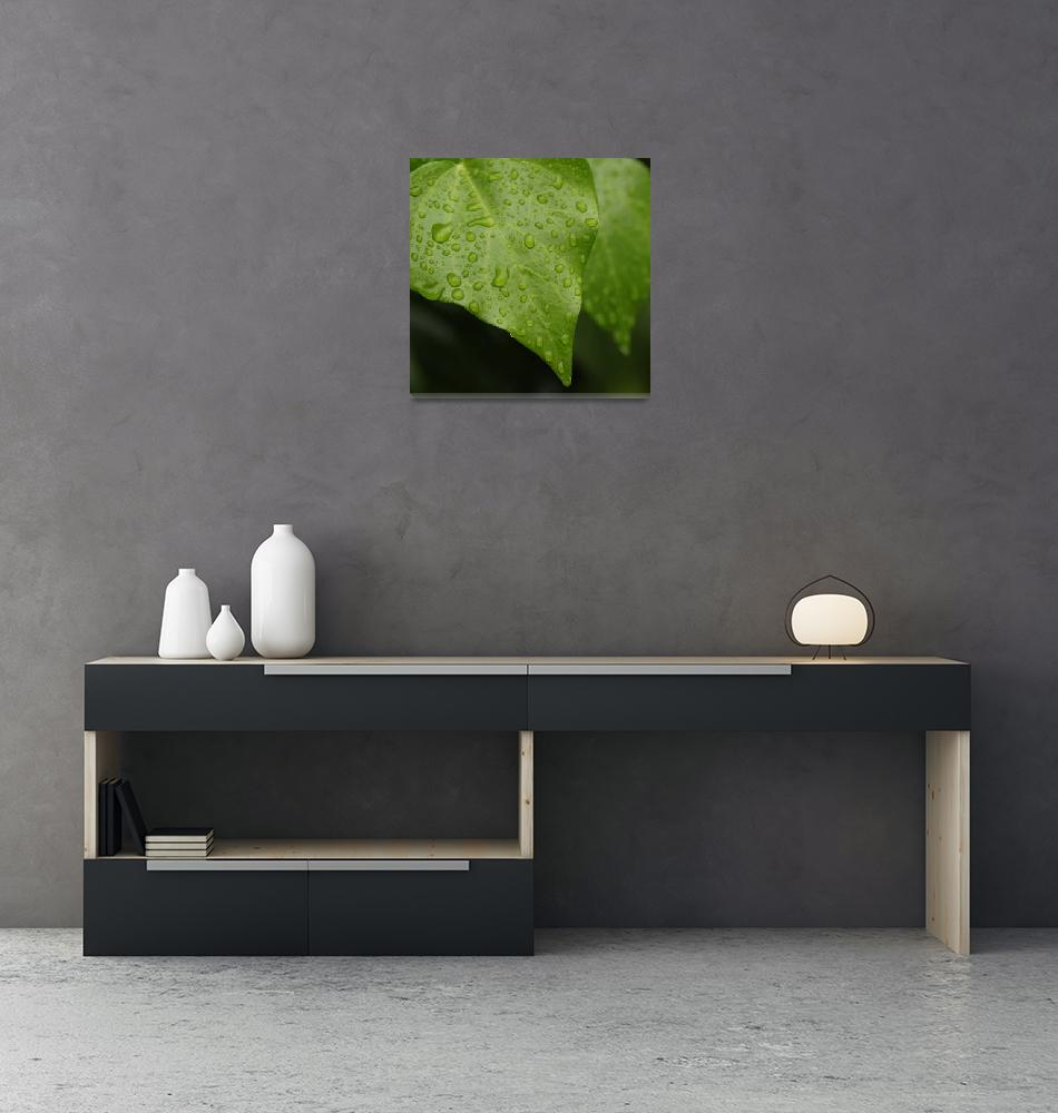 """rain on ivy""  (2013) by barbarag58"