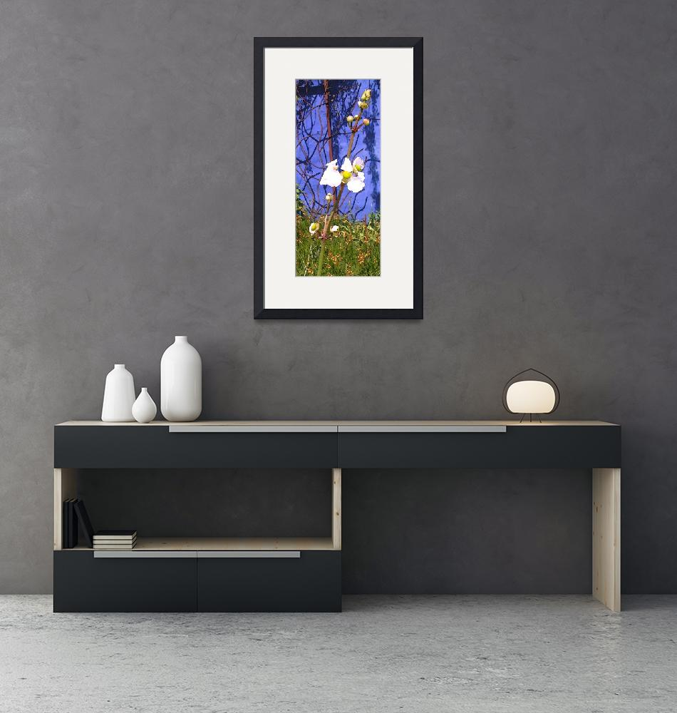 """""""Flower on Blue Wall""""  by Kirby"""