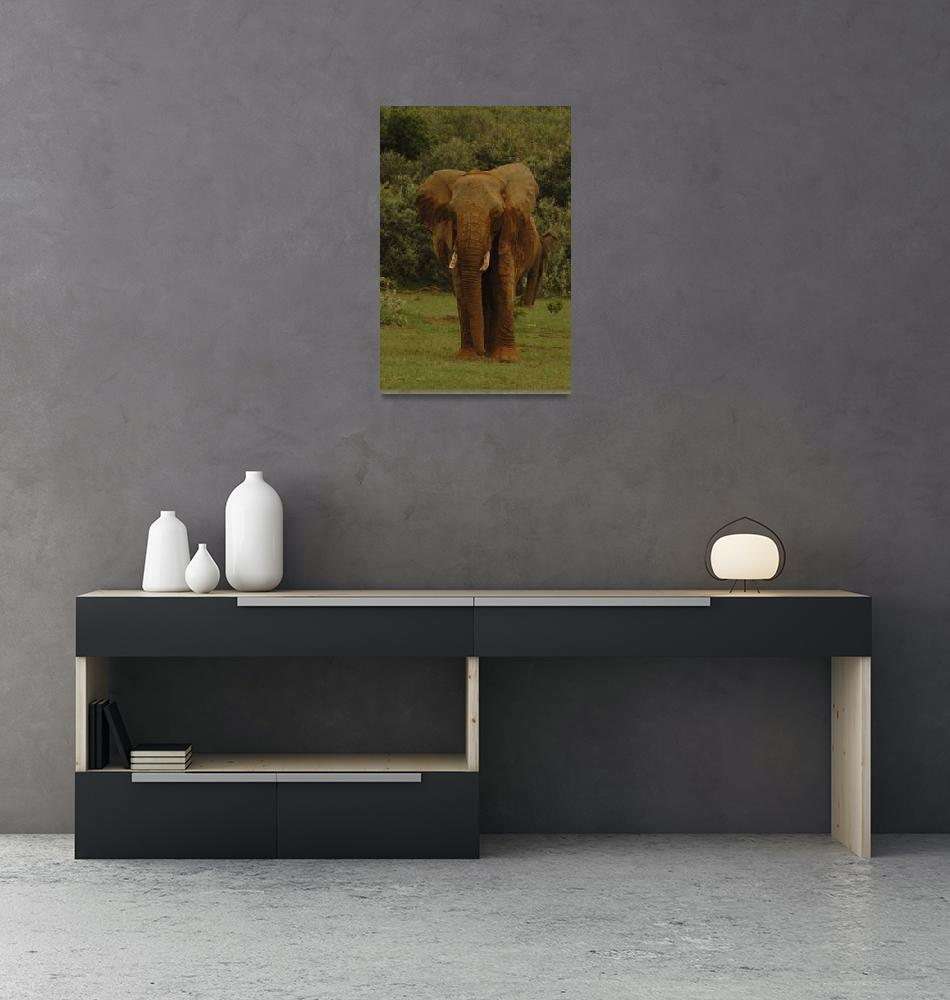 """defiant elephant""  (2006) by shortwork"