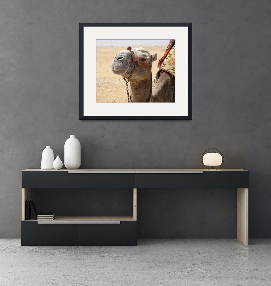 """""""Camel at Giza""""  (2008) by inquirewithin"""