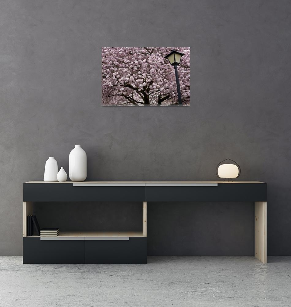 """""""Cherry Blossoms and Lamp, State Capitol, Olympia""""  (2009) by edleckert"""