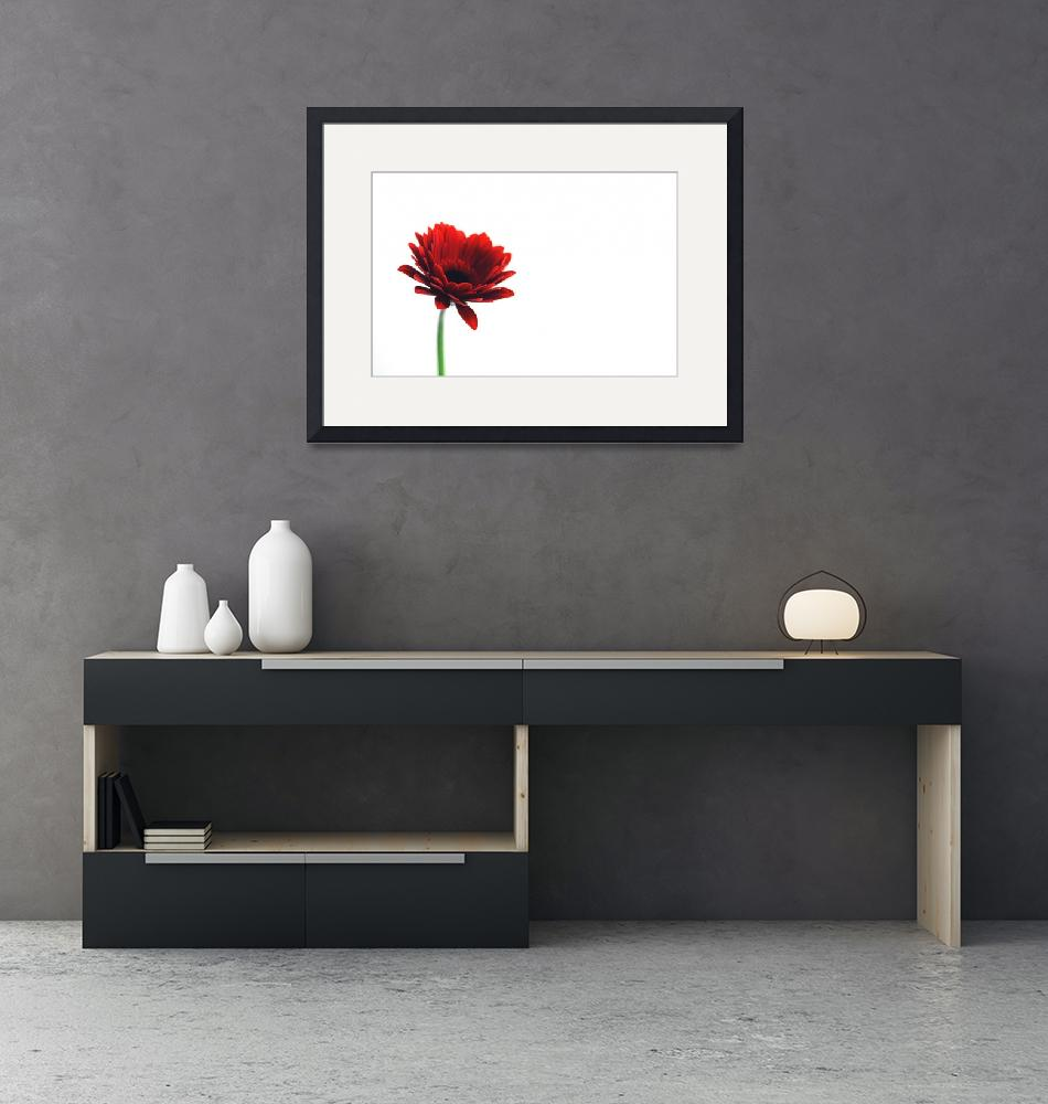 """""""Red Gerbera""""  (2011) by RobetWorth"""