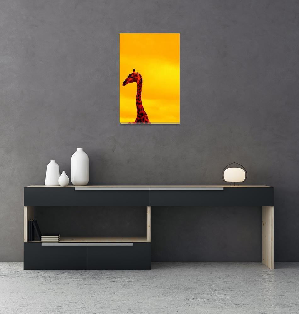 """""""iwolintshi Giraffe""""  (2009) by JonathanCJPhoto"""