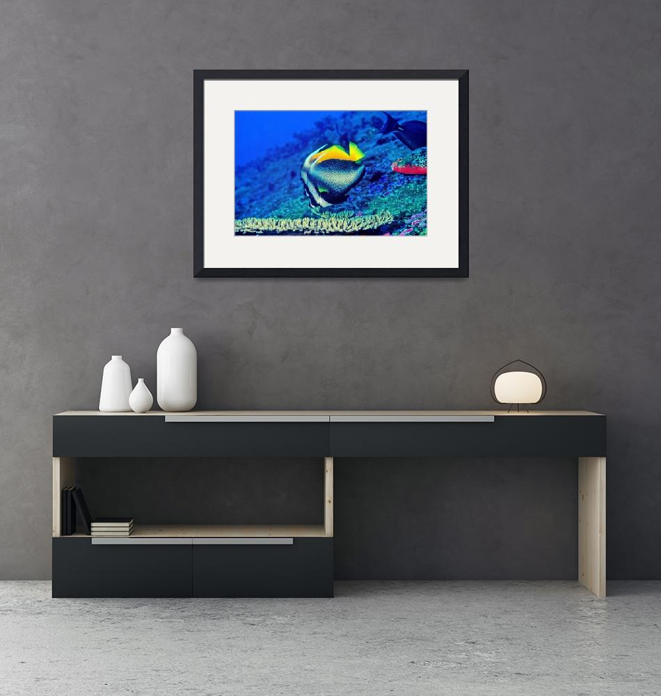 """""""Bannerfish Hovering Over Table Coral""""  (2001) by JoaoPonces"""