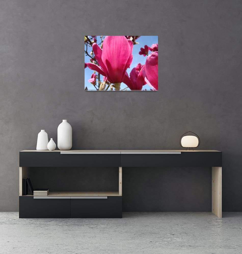 """Spring Magnolia Flowers 45 Magnolia Tree Art Print""  (2009) by BasleeTroutman"