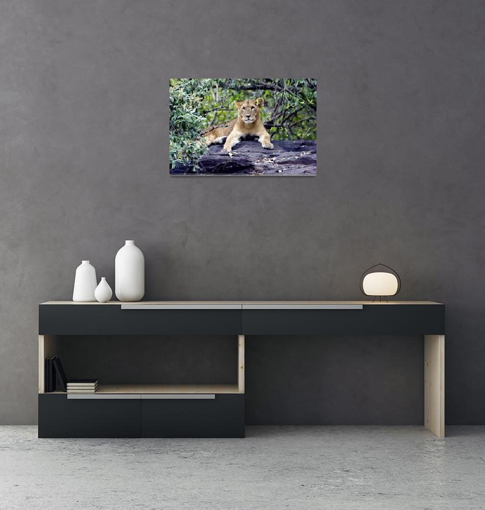 """The Lion Cub""  (2012) by pravine"