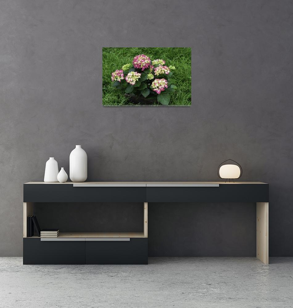 """Decorative Floral Pink Hydrangeas C031619""  (2019) by MasArtStudio"