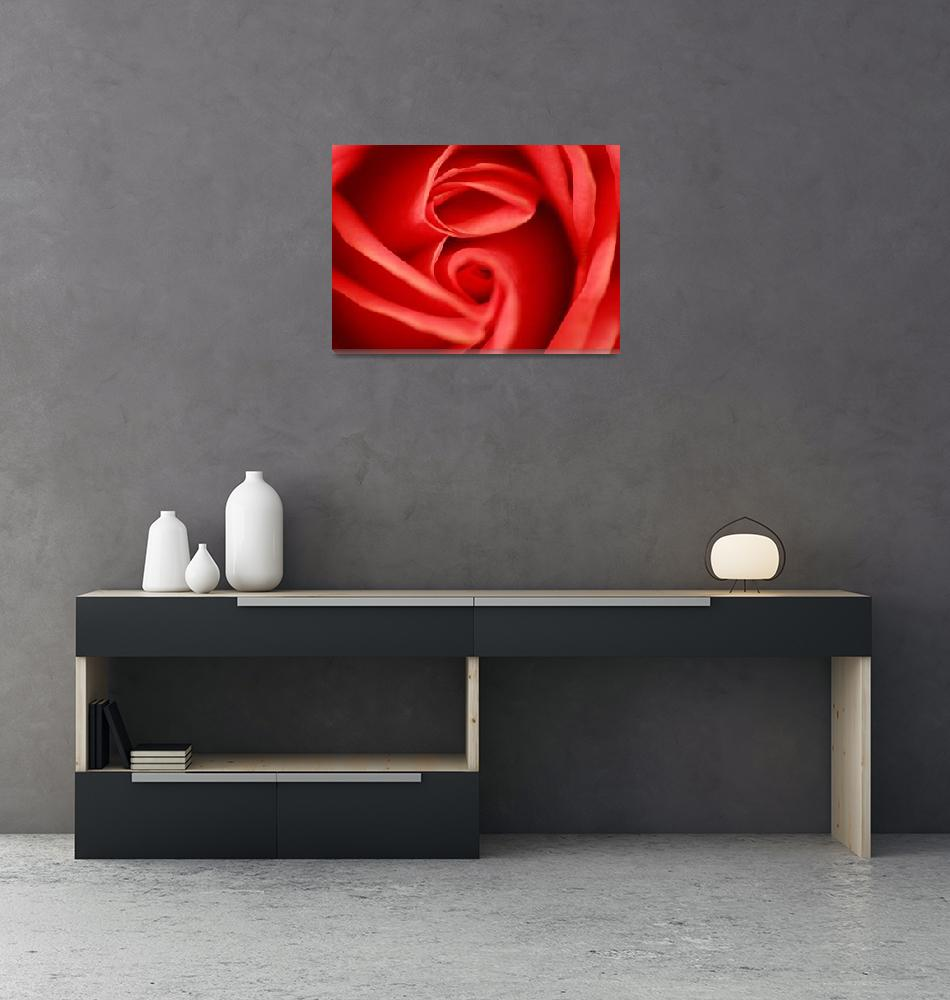"""""""Soft red rose""""  by scatani"""