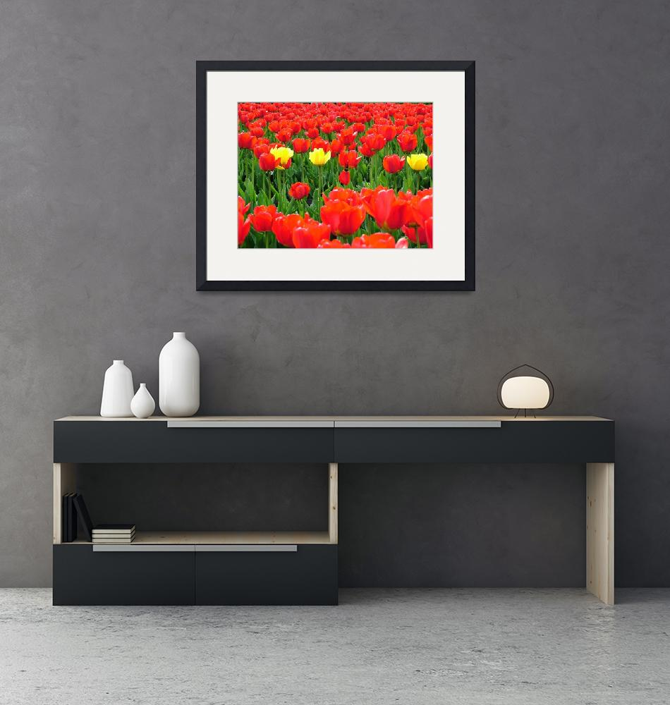 """""""Tulips in Moscow""""  (2007) by DonnaCorless"""