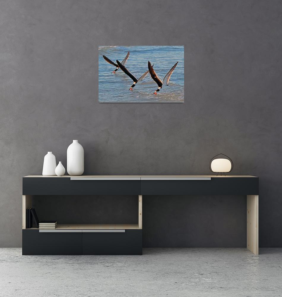 """""""Black Skimmer (Rynchops niger) 3""""  (2011) by shelshots"""
