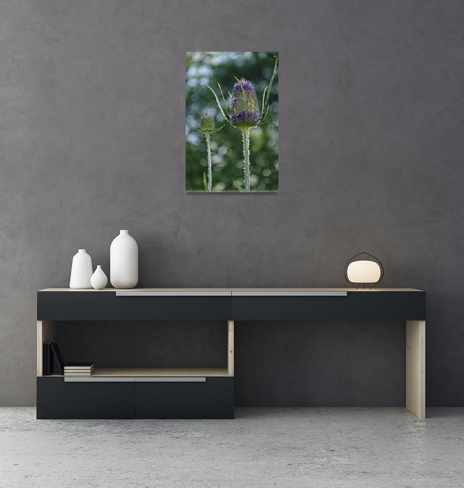 """Fading Teasel Flower (33672-RDA)""  (2012) by rodjohnson"