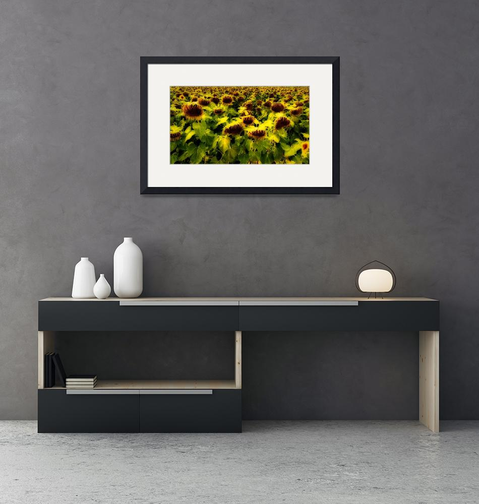 """Sunflowers"" (2008) by JamesHowePhotography"