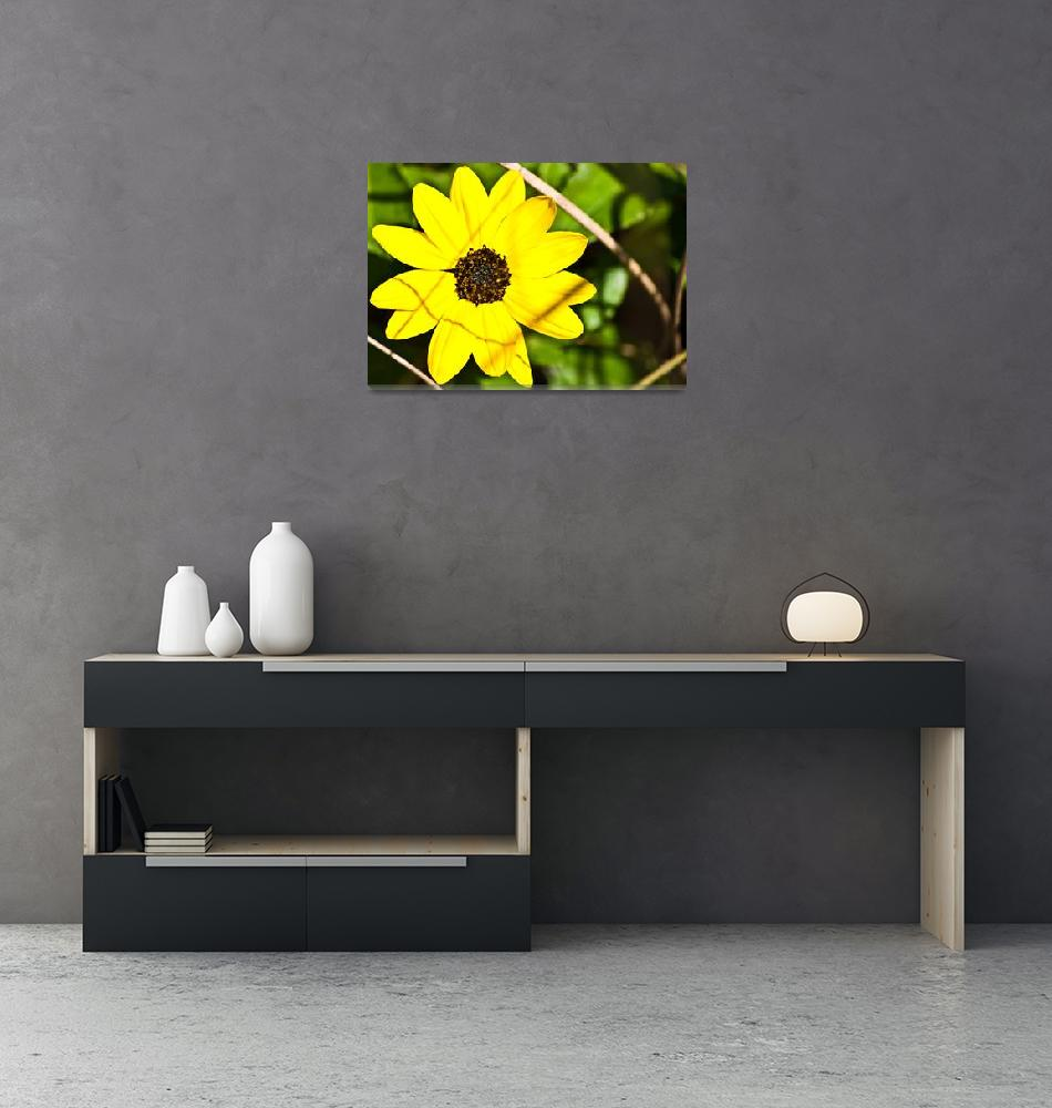 """""""Yellow Flower Feaver""""  (2011) by mcockrum"""