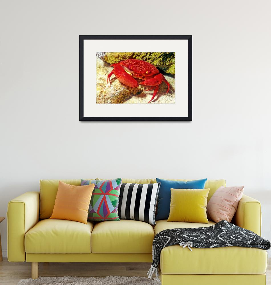 """""""Red Crab""""  (1995) by JoaoPonces"""