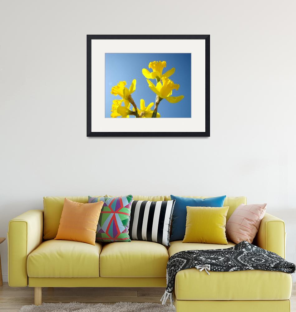 """""""Floral Fine Art Photograhy Spring Daffodils Sky""""  (2010) by BasleeTroutman"""