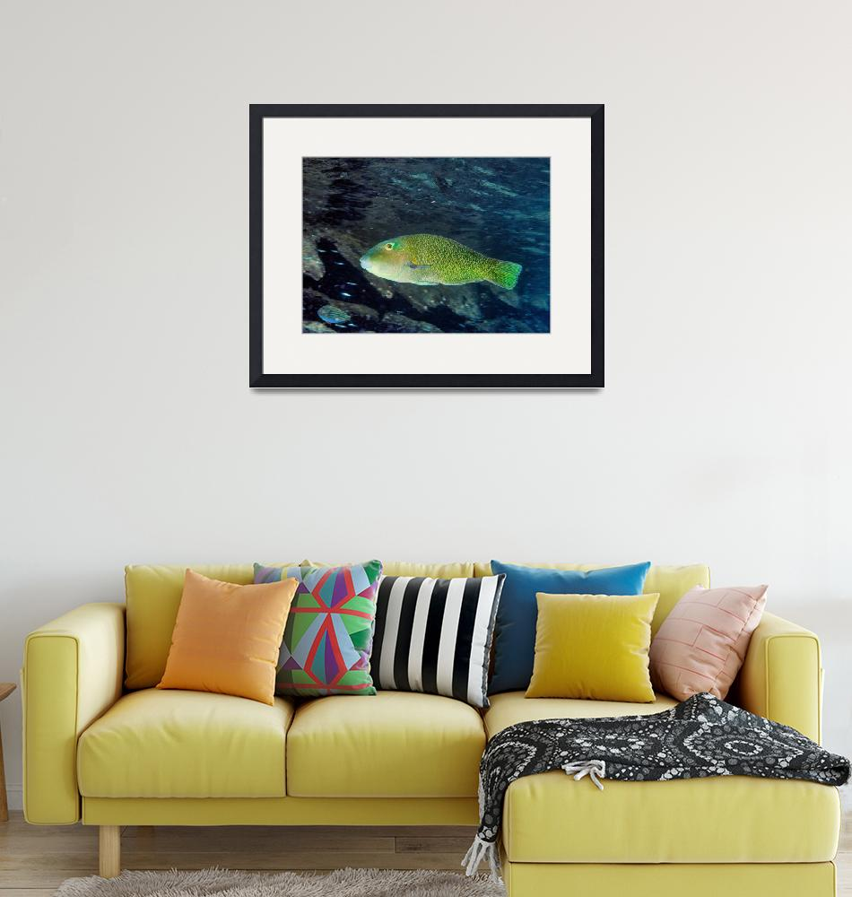 """""""Unknown Wrasse Fish""""  (2006) by JoaoPonces"""