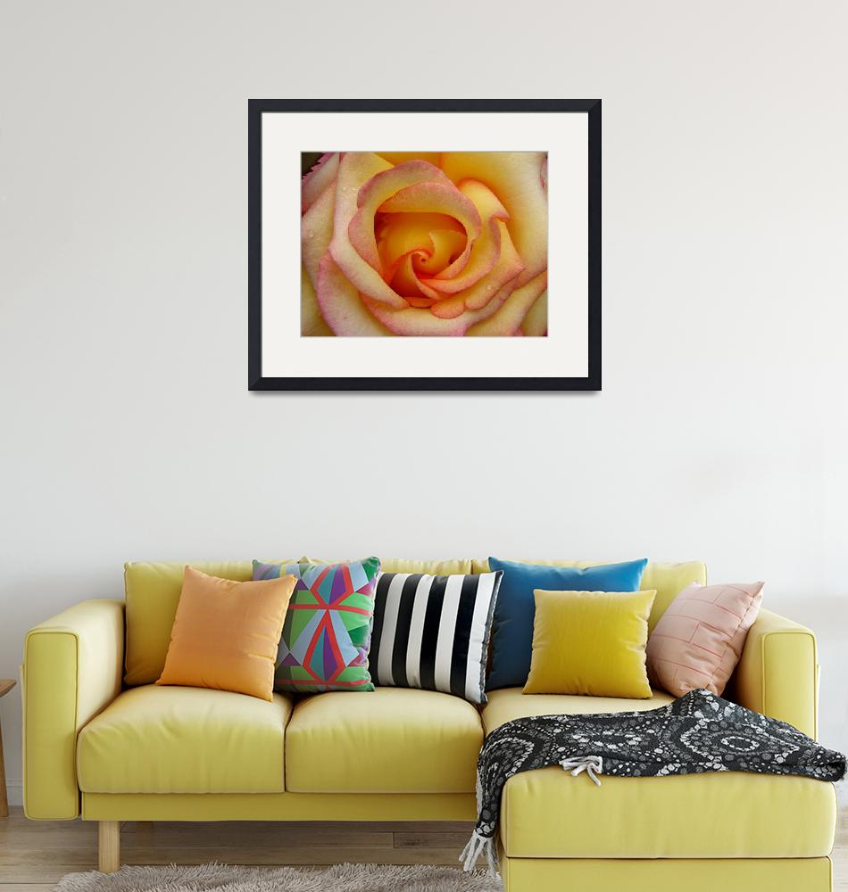 """""""Sunny Hill Rose""""  (2009) by 888dps"""