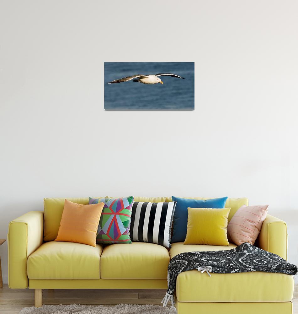 """flying Seagull""  by eyalna"